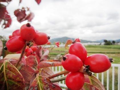 赤い実と三輪山