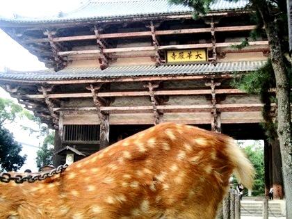 奈良公園の鹿、東大寺南大門