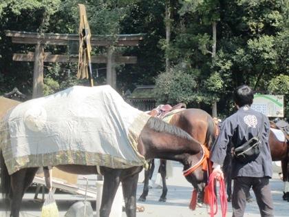 若宮神幸祭の馬