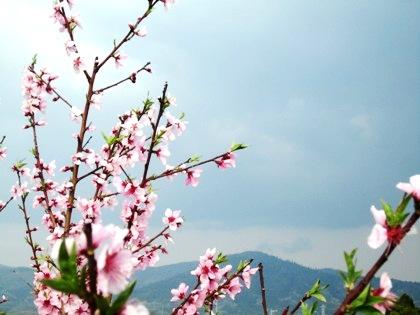 三輪山百景
