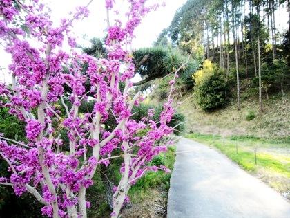 明日香村の花