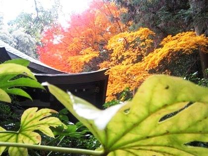 大神神社の紅葉