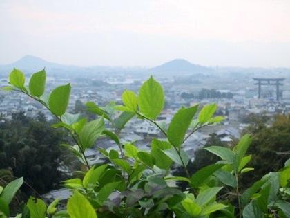 大美和の杜展望台の風景