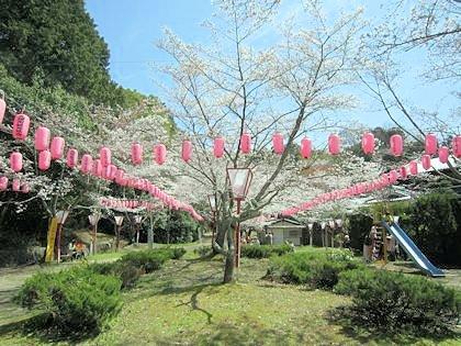 石上神宮の桜