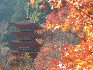 長谷寺五重塔と紅葉