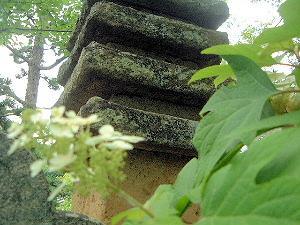 久米寺の紫陽花と十三重石塔