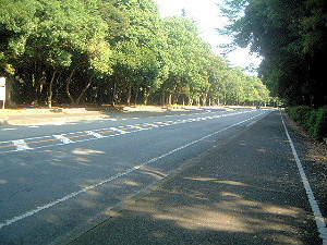 橿原神宮へ続く道路