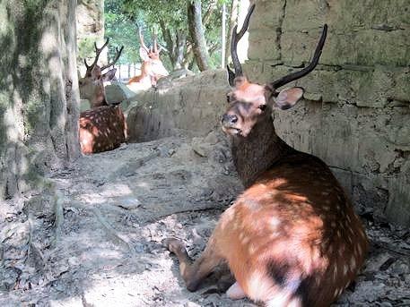 荒池園地の土塀の鹿