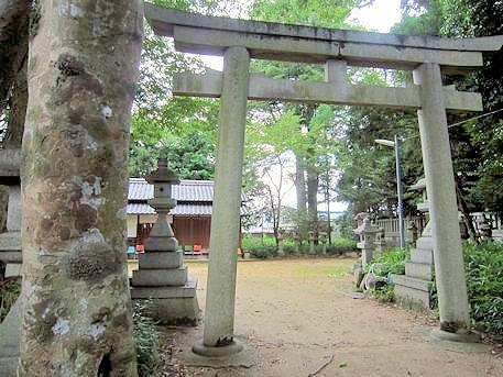 森神社のケヤキ