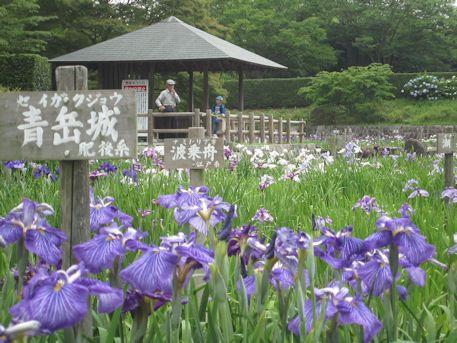 花菖蒲の青岳城