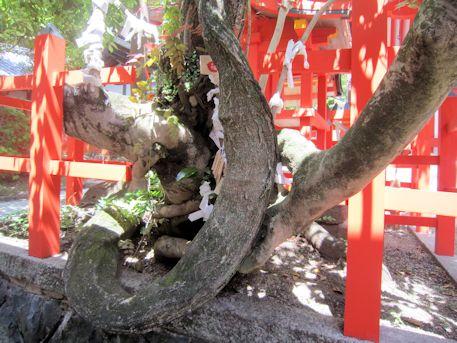 風宮神社の七種寄木