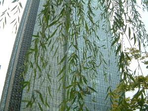 東京ミッドタウンと緑