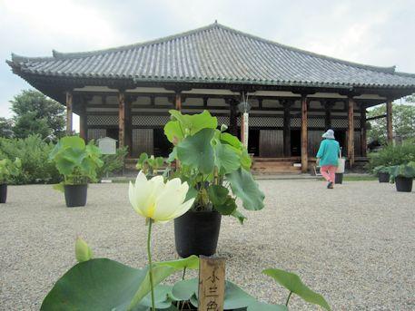 lotus of Gangoji Temple