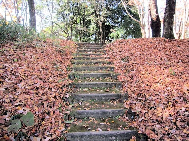 高松塚古墳周辺地区の落葉