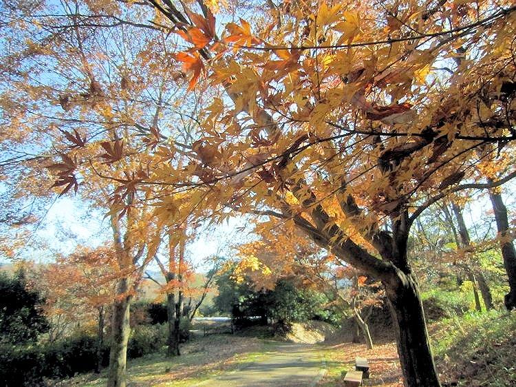 高松塚古墳エリアの紅葉