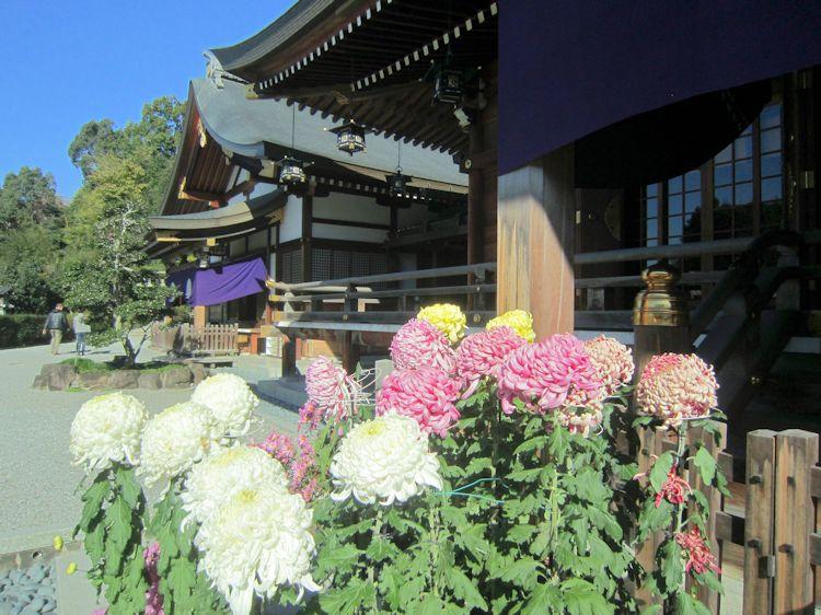 大神神社の菊花奉納