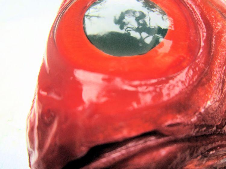 キンメダイの鼻孔