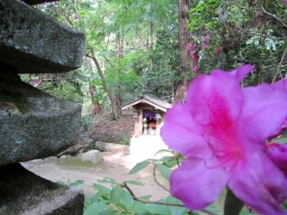 長岳寺のツツジ