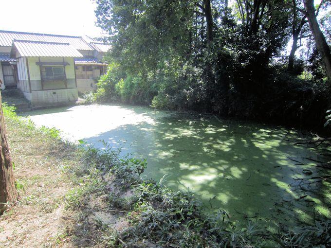 糸井神社の池