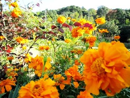 耳成山と花