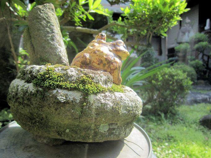 中庭の蛙石
