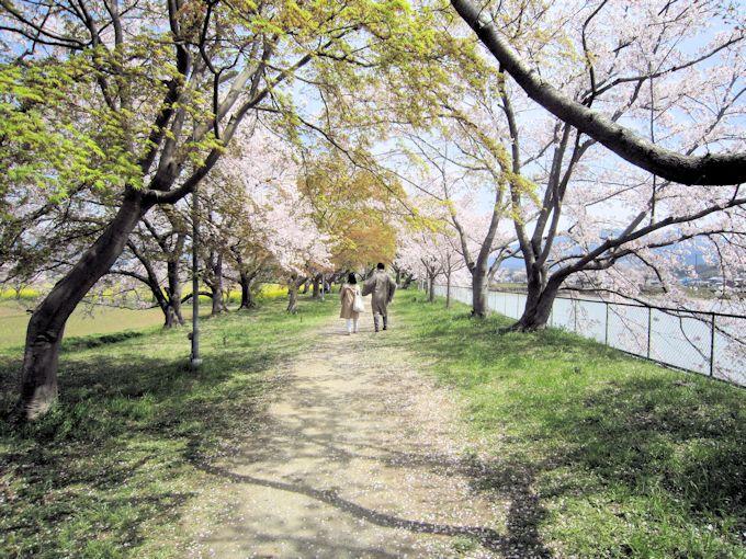 醍醐池周辺