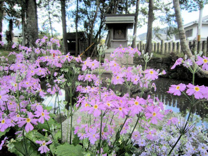 市杵島神社と春の花