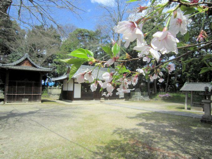 国津神社の花