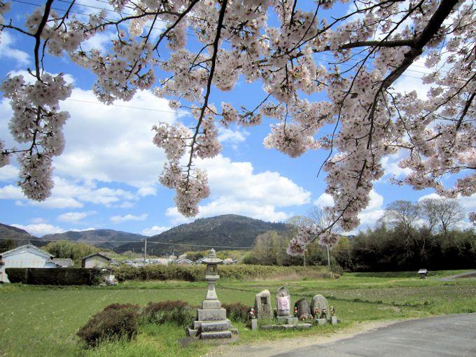 三輪山と桜