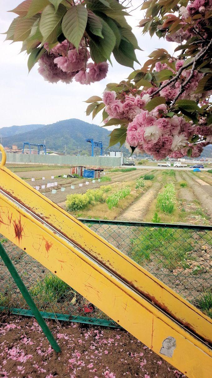 三輪山遠景