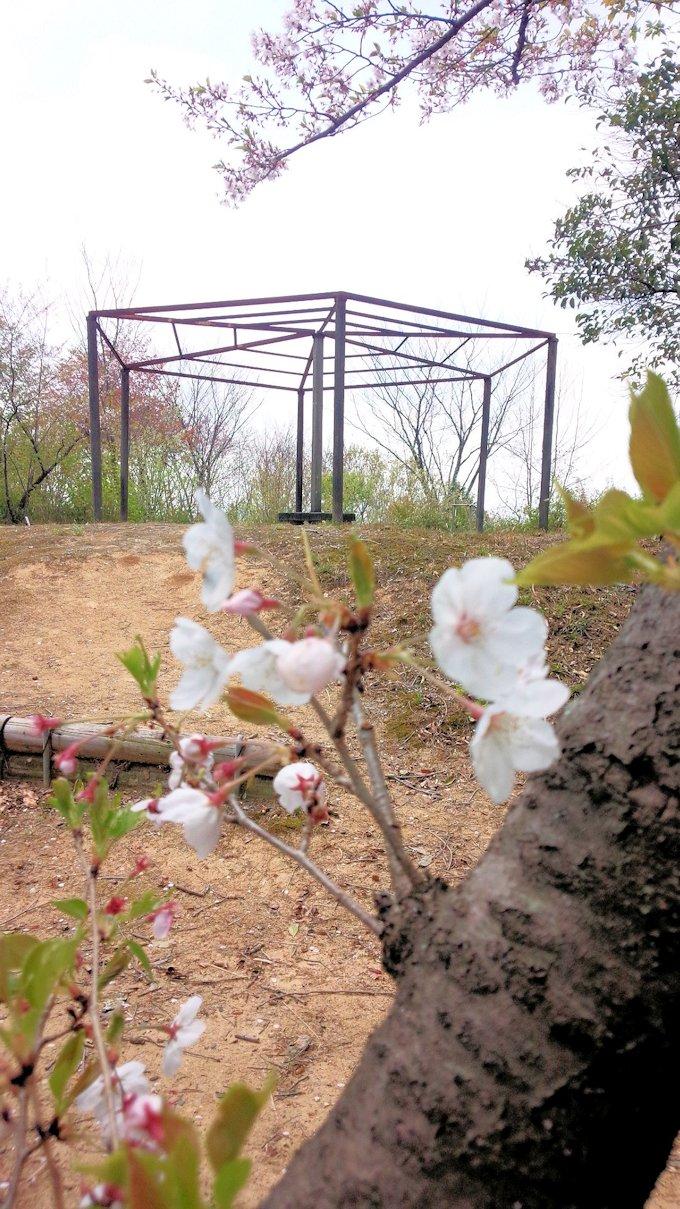 安倍山城跡の桜