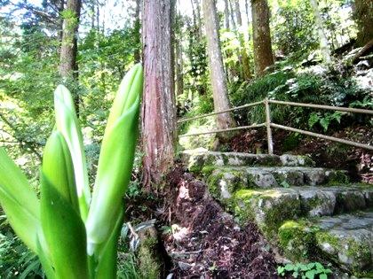 蜻蛉の滝の石段