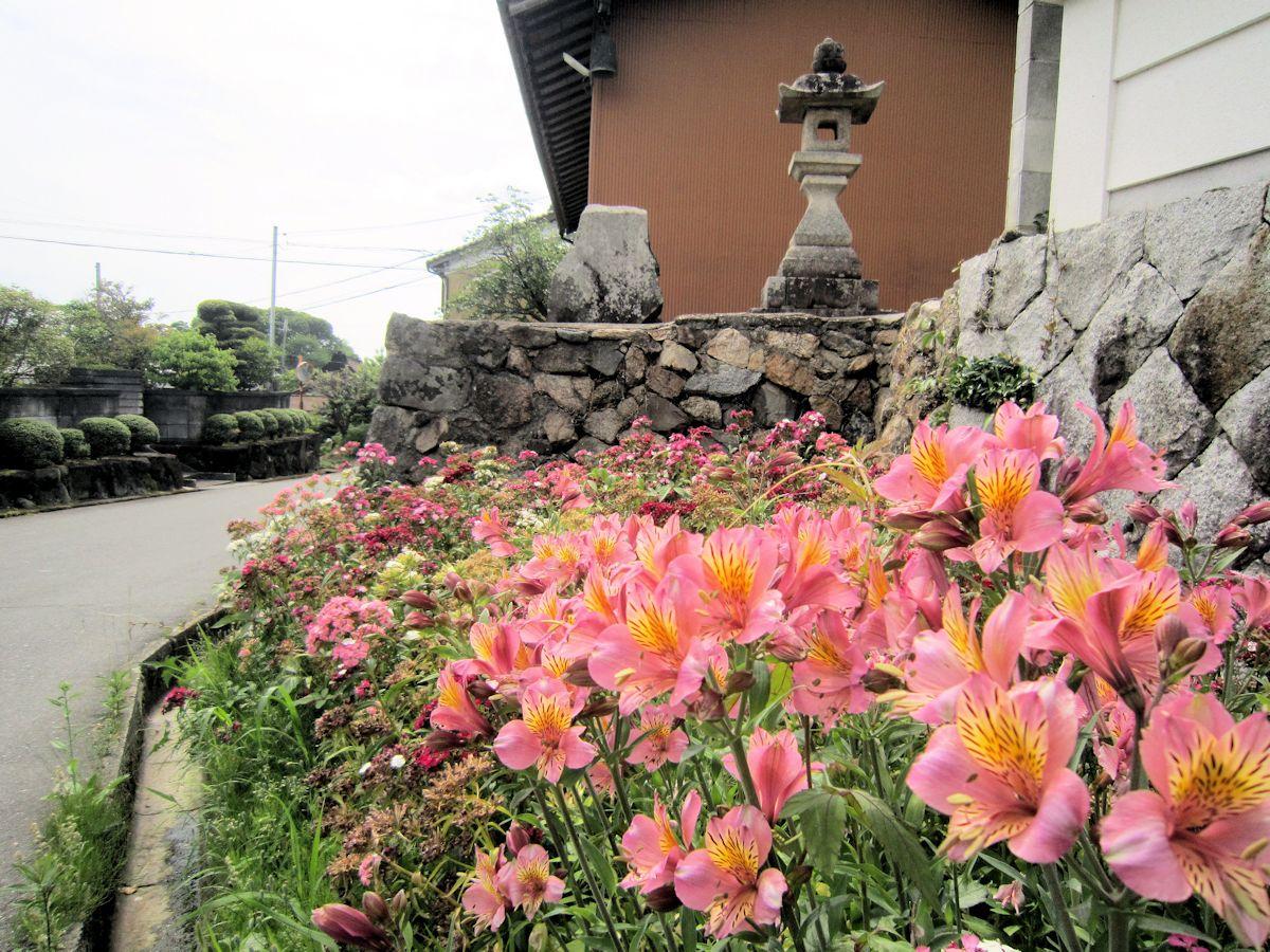 渋谷町集落の花