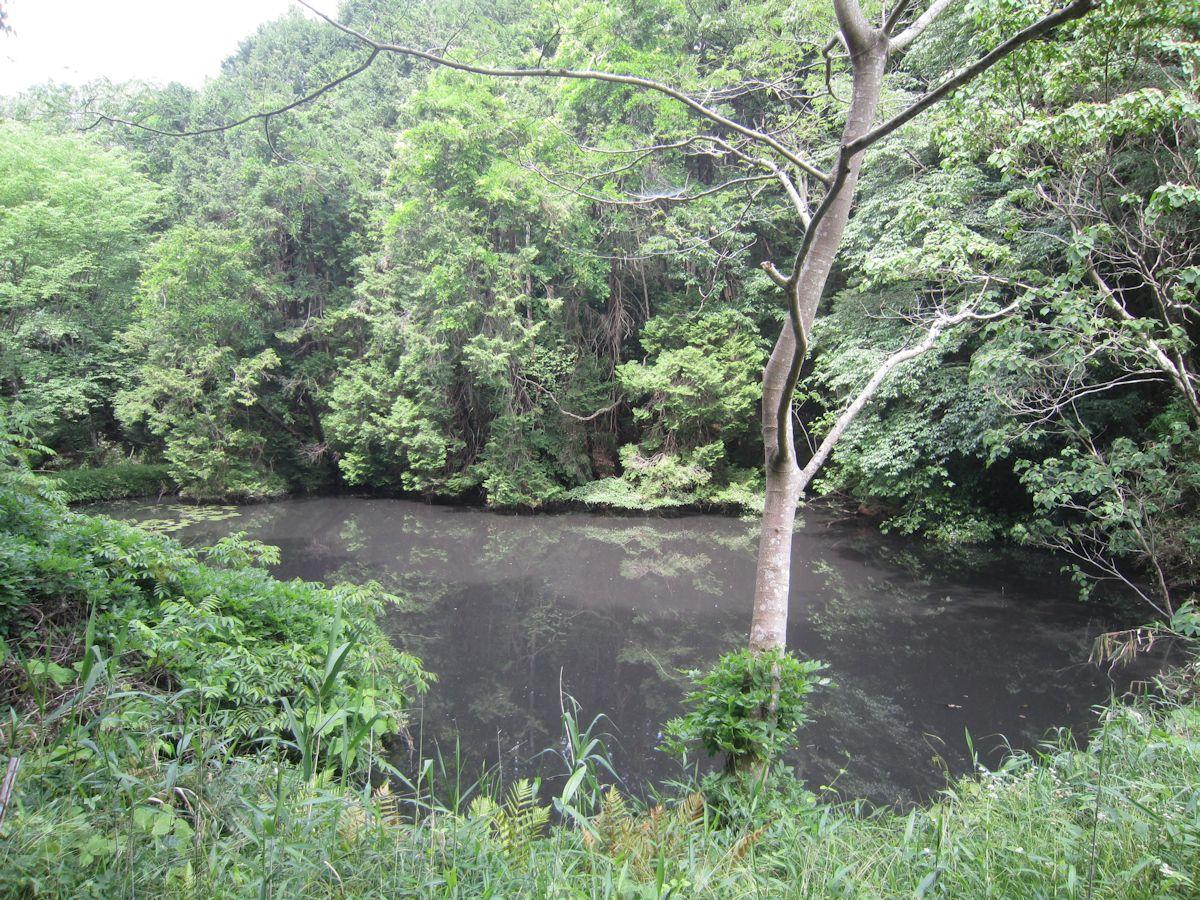 青木廃寺跡の池