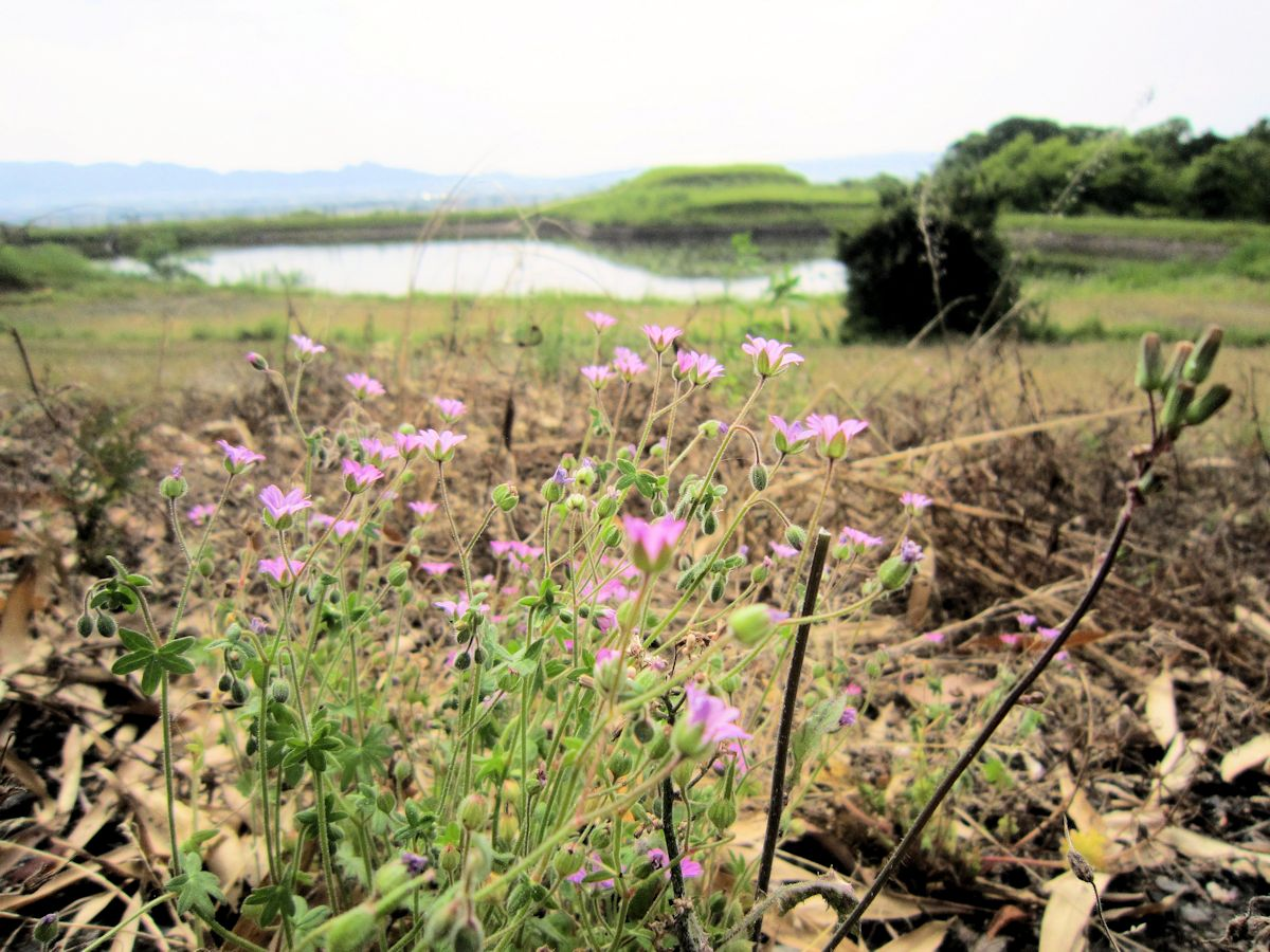 ヲカタ塚古墳と花
