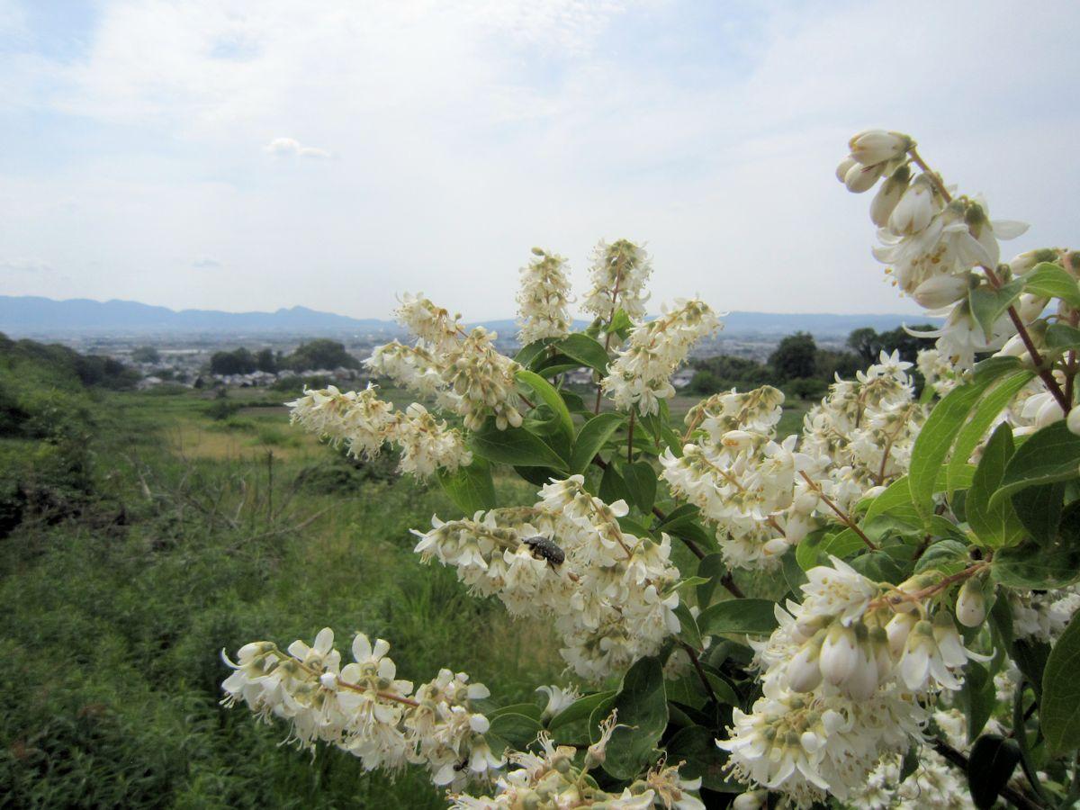 ヲカタ塚古墳近くの花