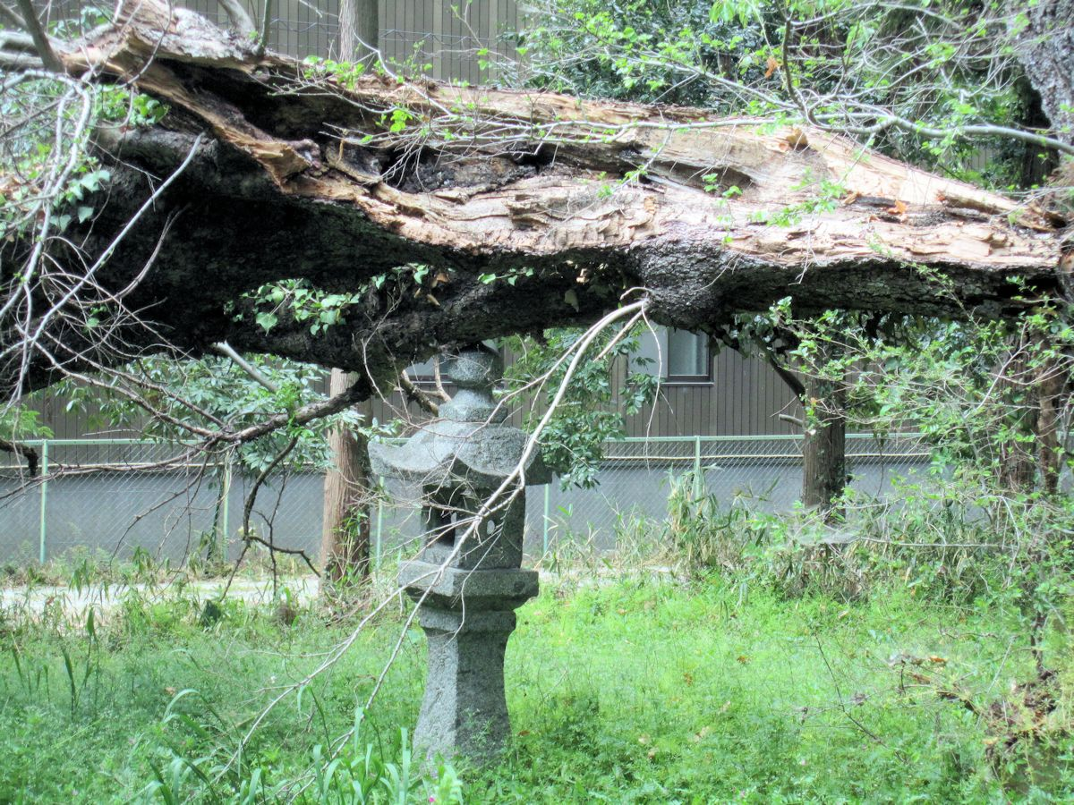 小杜神社石燈籠