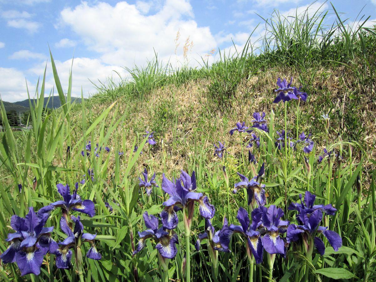 茶ノ木塚古墳の花