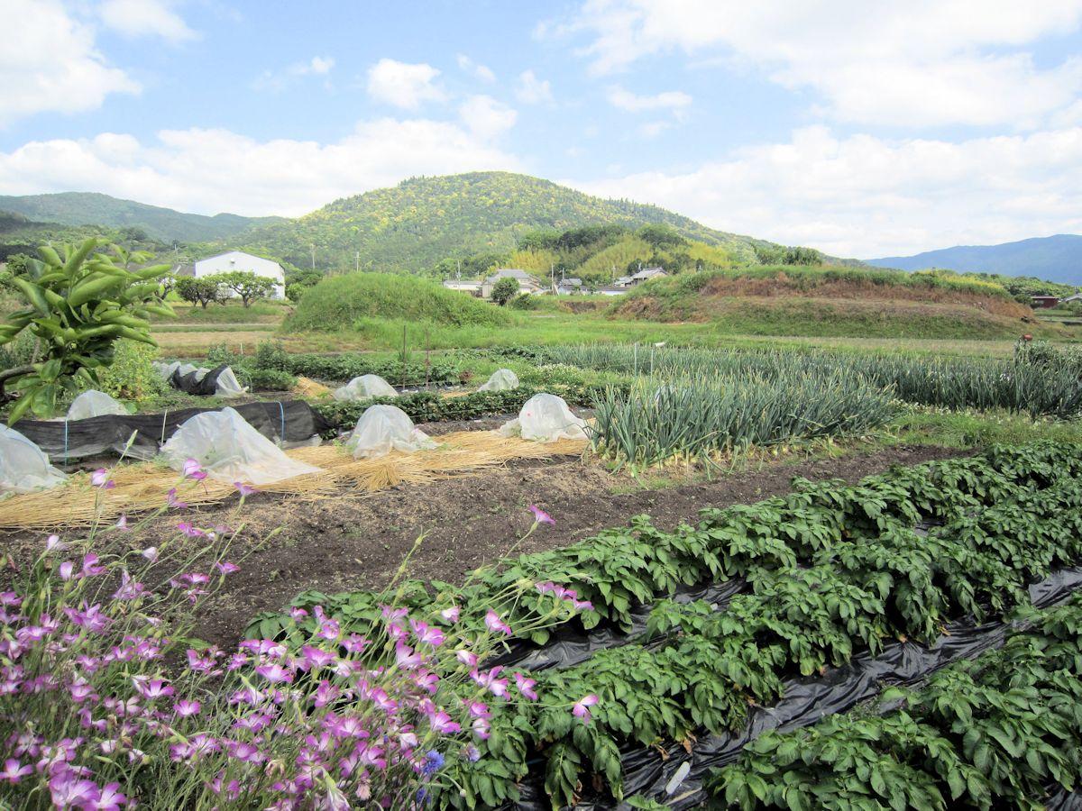 三輪山と小古墳群