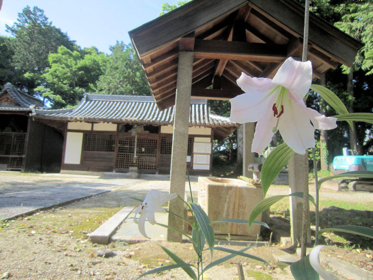 国津神社のササユリ