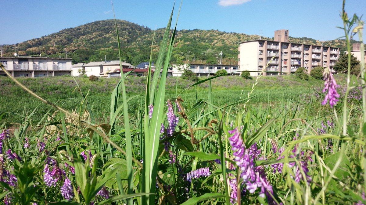 草藤と三輪山