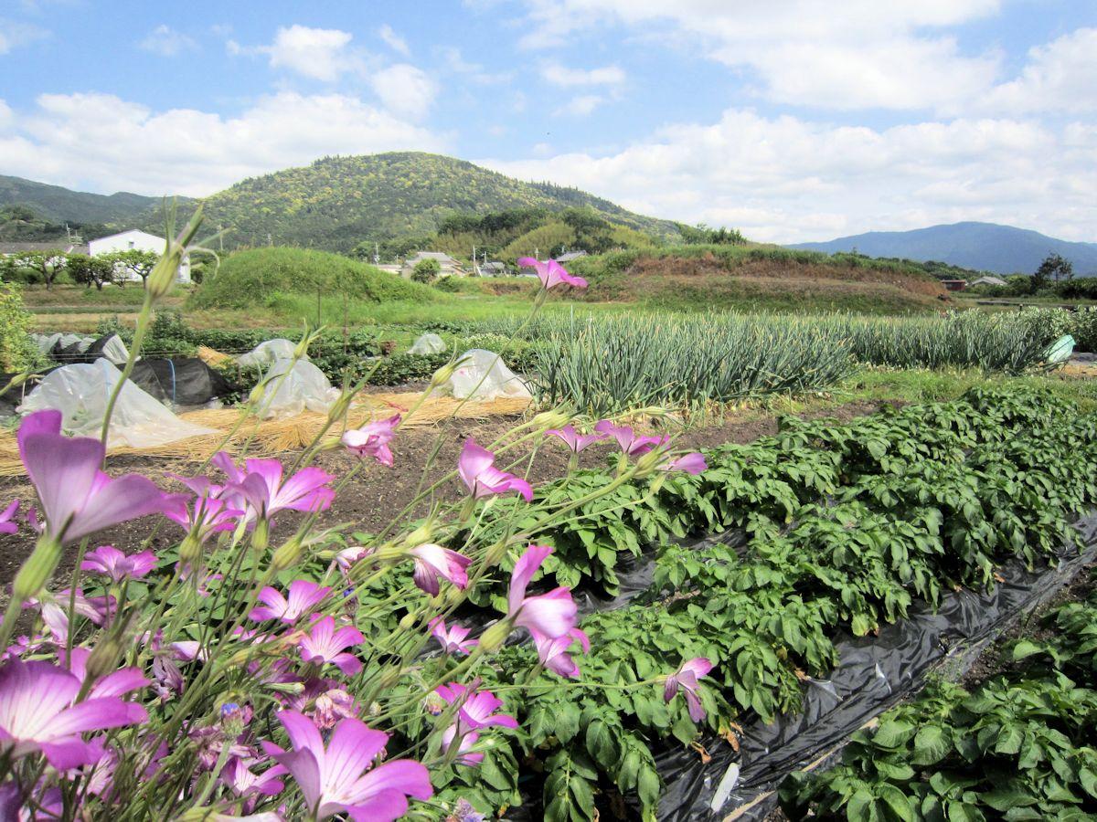 サシコマ古墳と小川塚古墳の田園風景