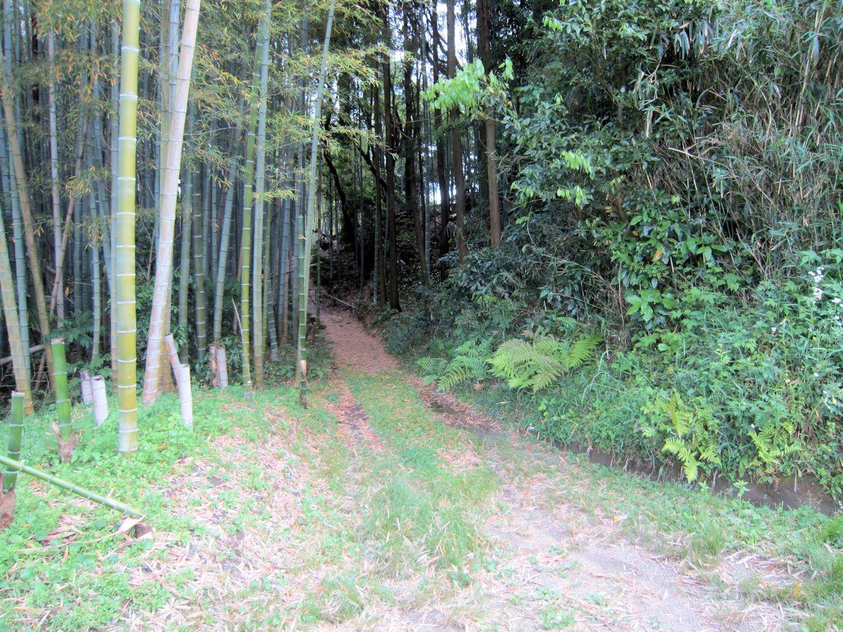 高田山口神社へ続く竹林
