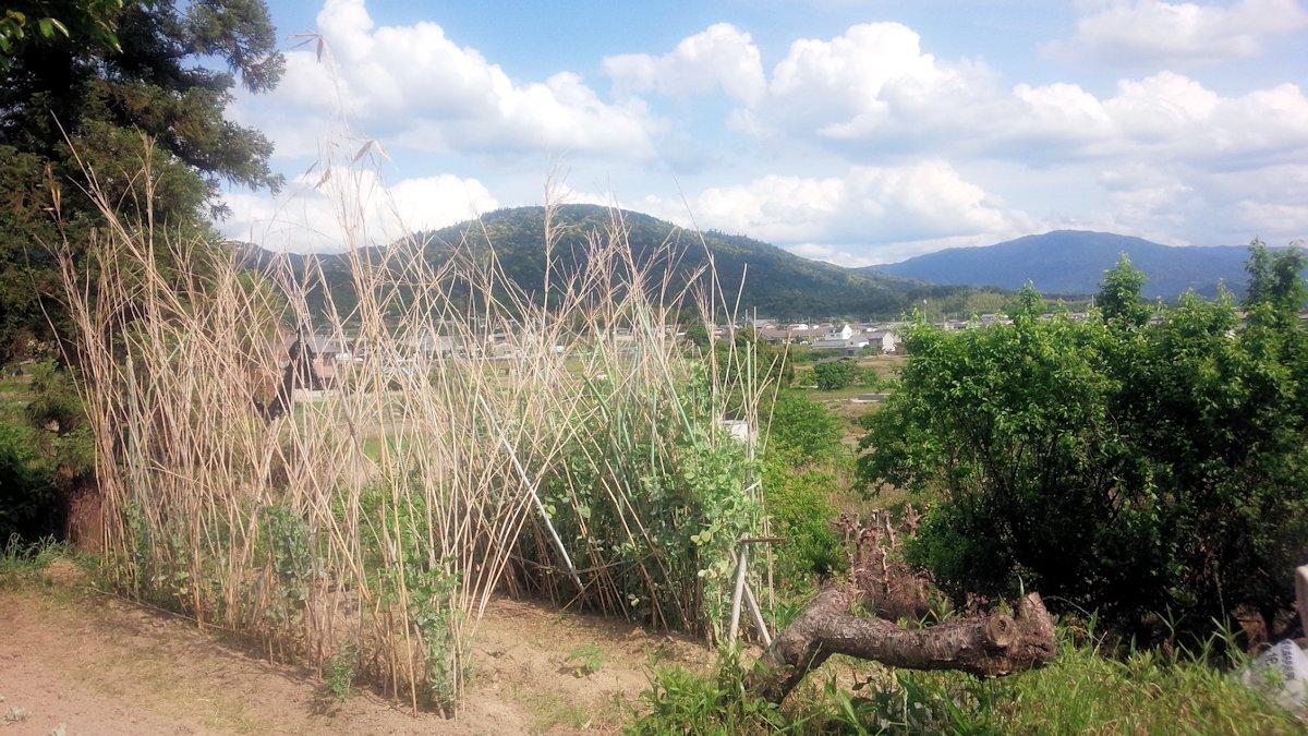 柳本大塚古墳から望む三輪山