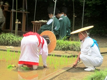 大神神社の御田植祭