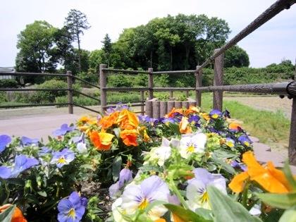 山の辺の道の花壇