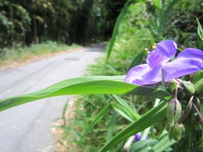 山の辺の道の花