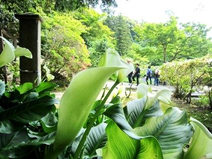 長岳寺のカラー