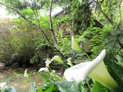 長岳寺のカラーと本堂