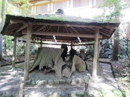 大神神社の衣掛杉